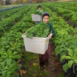 Students working on the UMass Amherst farm